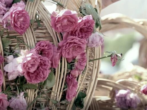 Les bienfaits de l'eau florale                            Rosa Damascena