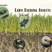 Lawn Insects