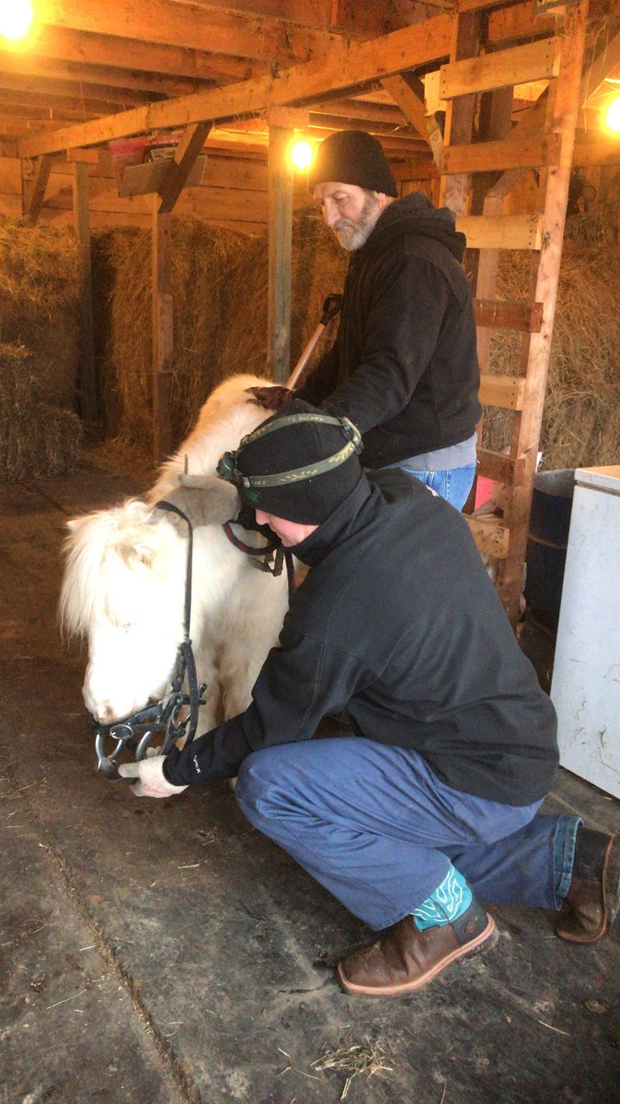The Dentist Came To The Barn!