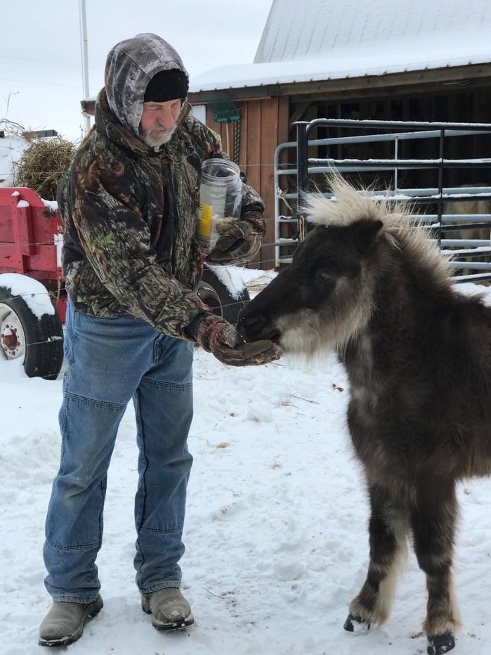 To Gallop Thru The Snow