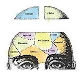 Thumbnail of a drawing of the top of a man's head. The drawing shows only above his eyes and shows the top of his head being opened up. Parts of the brain are mapped out into sections and labeled like a diagram.