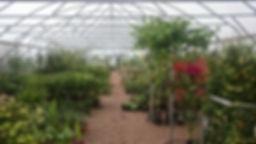 Urban & Rural Plants Exeter