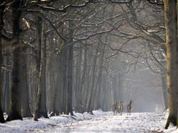 _CCP5453 cerfs sous la neige