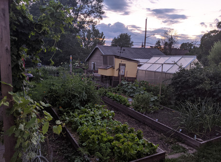 Urban Agriculture on a Small City Lot - Sustainability Chats Recap