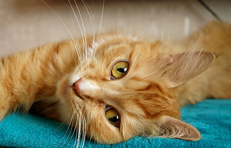 animal-cat-close-up-416195.jpg