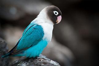 birds-2595073_1920.jpg