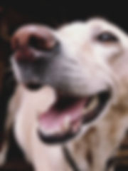 adorable-animal-canine-662417.jpg