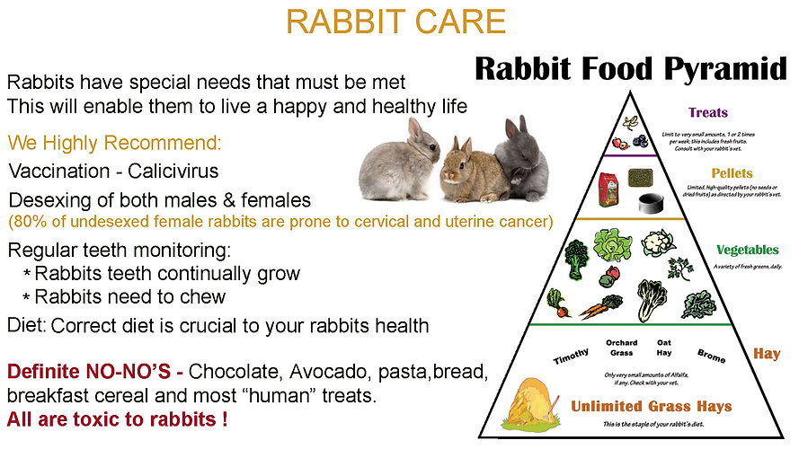 Rabbitinfo.jpg