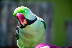 animal-avian-beak-1040398.jpg