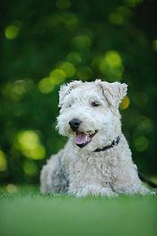 white-dog-1313254.jpg