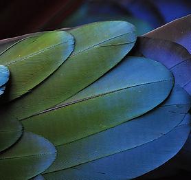 feather-731450_1920.jpg