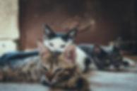 animal-photography-animals-babies-979503