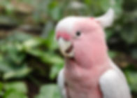 bird-3162504_1920 - Copy.jpg