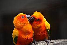 parrot-2555294_1920 - Copy.jpg