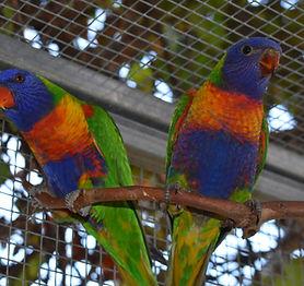 Bird (Avian)  information