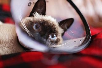 adorable-animal-cat-776375.jpg