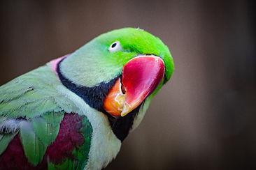 animal-avian-beak-1040397 - Copy_edited.