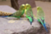 animal-world-animals-avian-461013.jpg