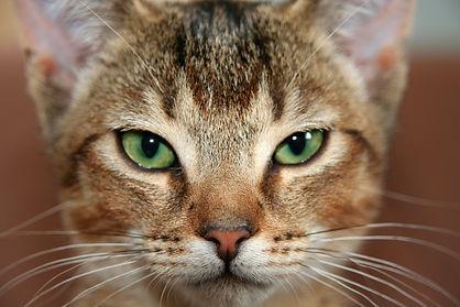 adorable-animal-animal-photography-41620