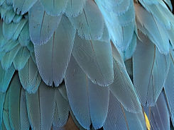 feather-1952382_1920.jpg