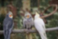 bird-3342850_1920.jpg