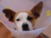 dog-1191676_1920.jpg
