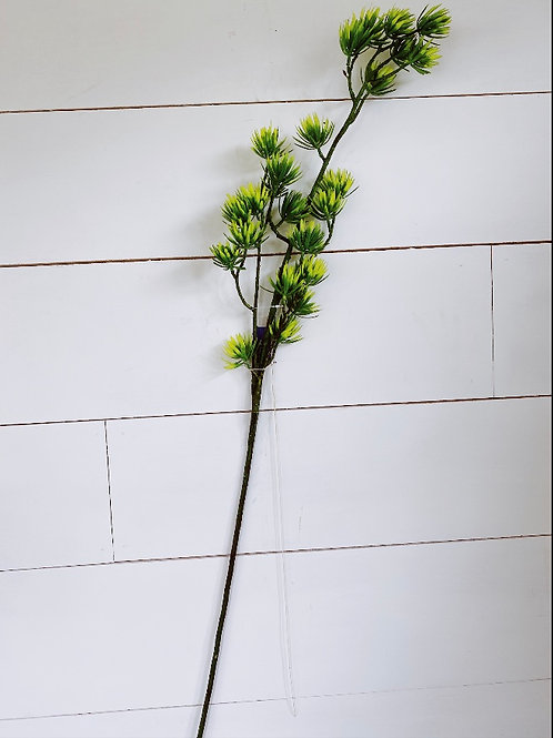 Cypress Spray