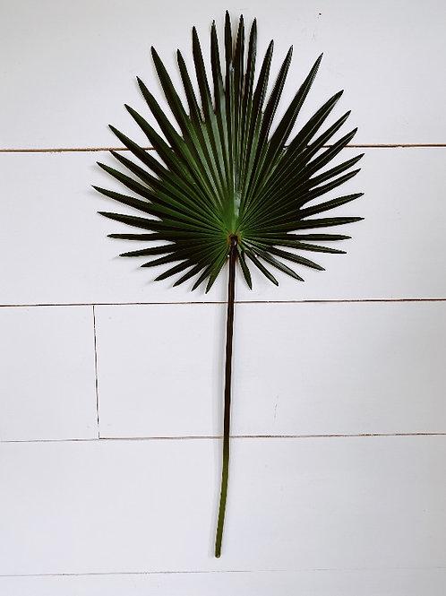 Fan Palm Spray