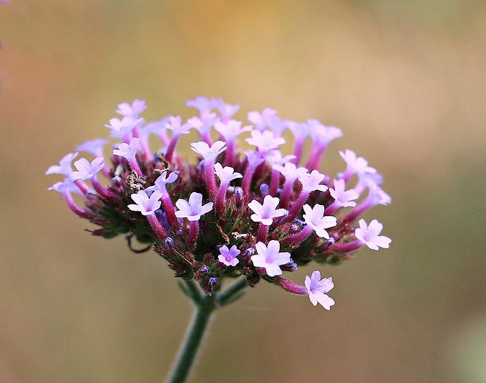 flower-1646973_1920.jpg