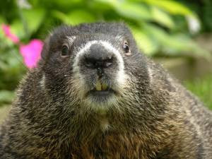 Keeping the Groundhog Away - 10 Ways to Keep Your Team Engaged