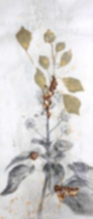 akira-artiste-hedera-helix