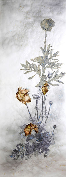 akira-inumaru-artiste-anthemis-tinctoria