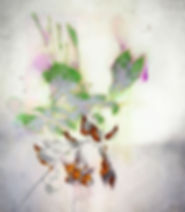 akira-inumaru-artiste-fuchsia