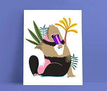 Mijke Coebergh, mandrill monkey illustration