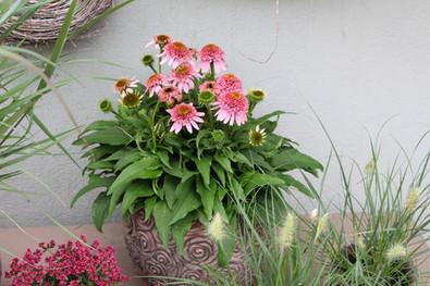 Bepflanzungen 5