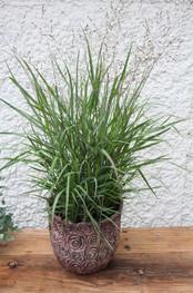 Bepflanzungen 7