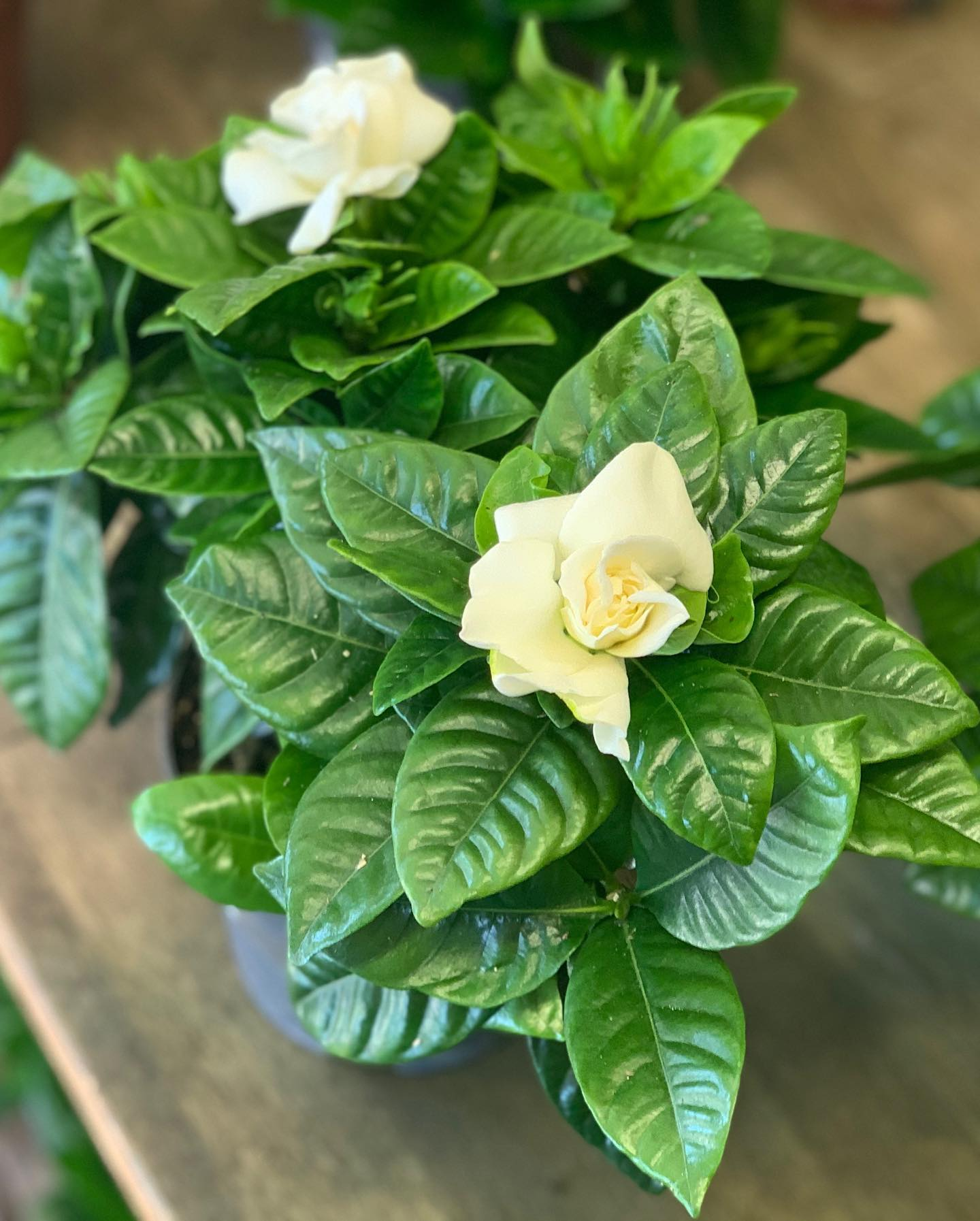Bring in the outdoors with these beautiful houseplants.. 🌱
