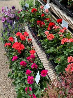 Fresh Flowers in Stock