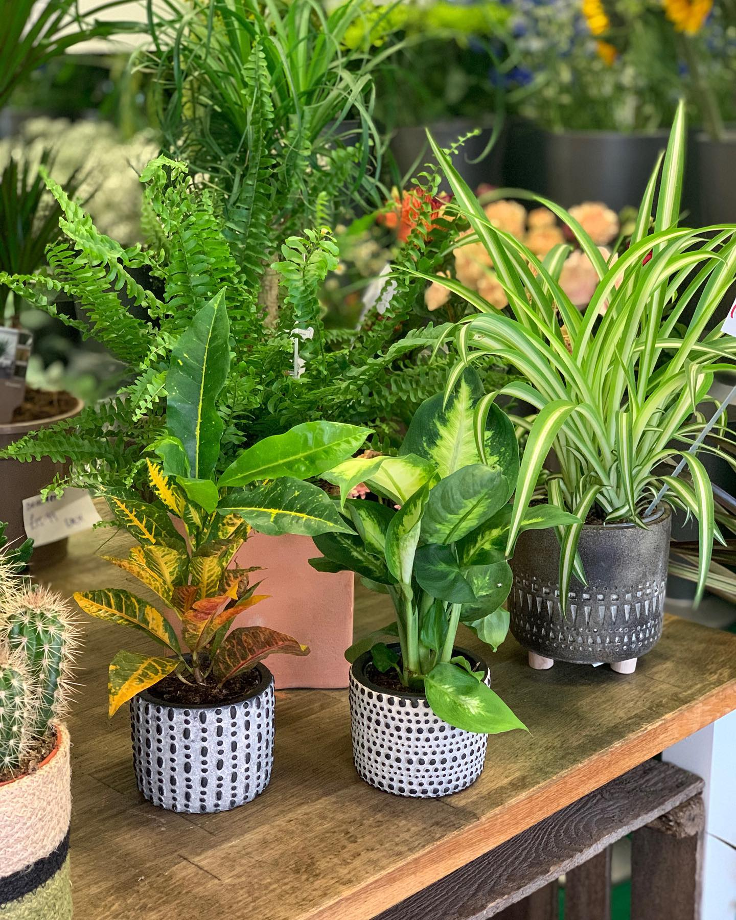 Beautiful New Collection of Houseplants