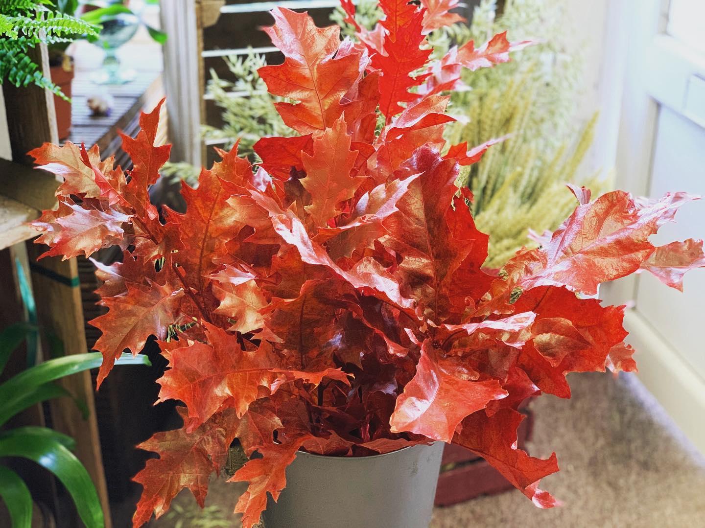 Oak Leaf 🍂