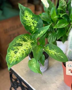 Beautiful New Collection of Houseplants