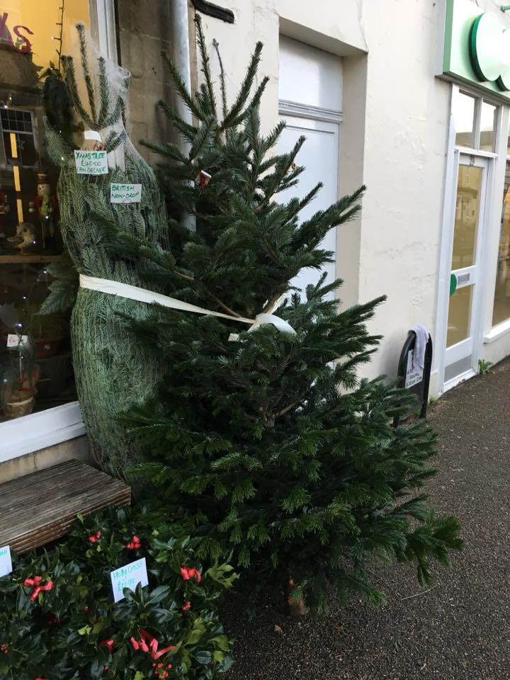 Non-drop British Christmas Trees