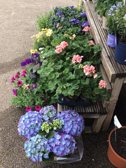 Lots of lovely plants to choose!