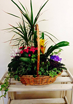 Lovely Planted Baskets