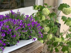 Plants Ready for Garden