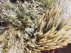 Oats & Wheat 🌾