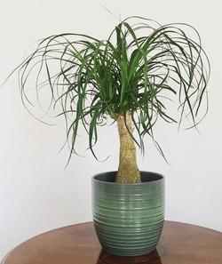 We love houseplants!