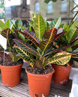 New house plants in stock