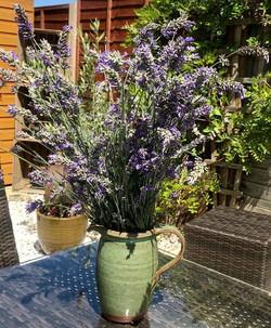 Fresh cut Lavender, smells divine