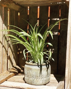 Four beautiful houseplants